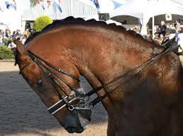 decalage-antero-posterieur-cheval